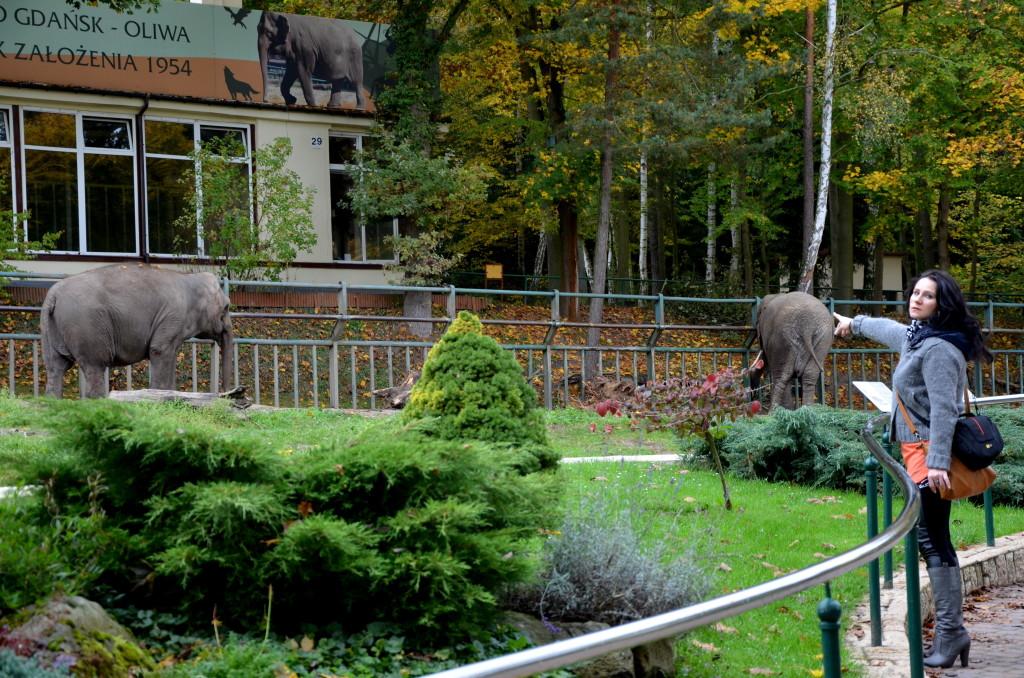 zoo  Sopot 17 października 2014