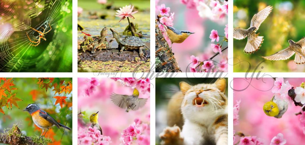 Chen FuHi fotograf Tajwański