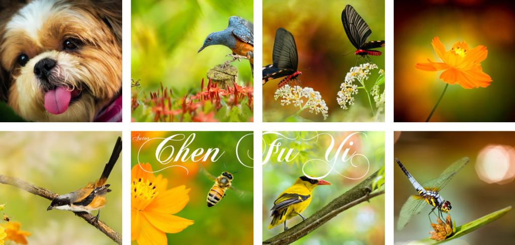 Chen FuYi fotograf