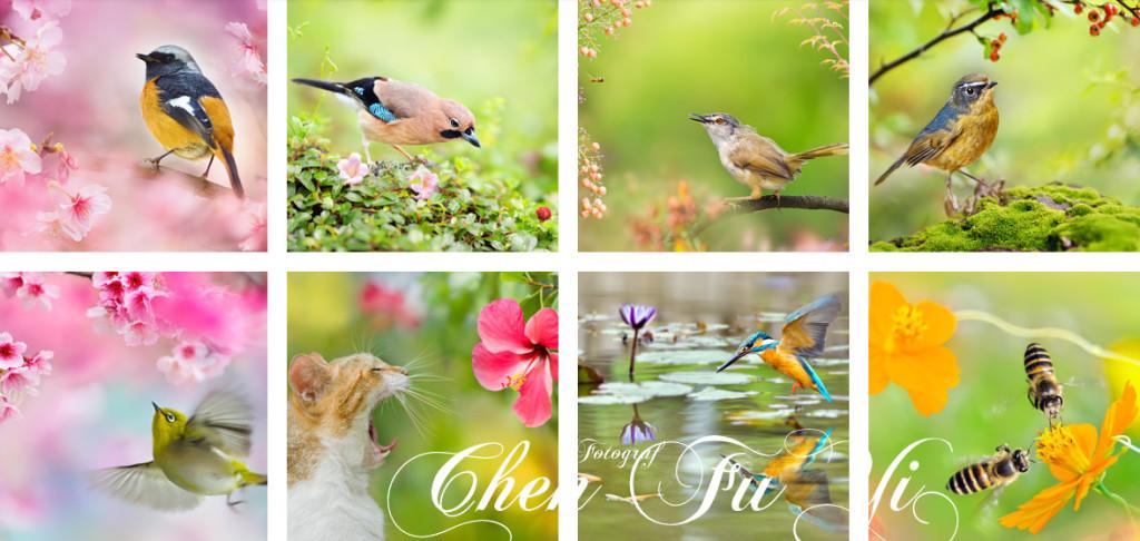 Chen FuYi fotograf 3